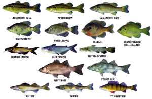 Alabama Fishing and Boating FYI's - Southern Fishing News